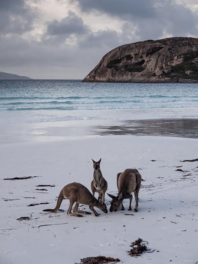 viaje de novios. Australia